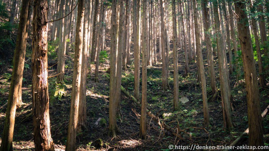 名草巨石群の杉林