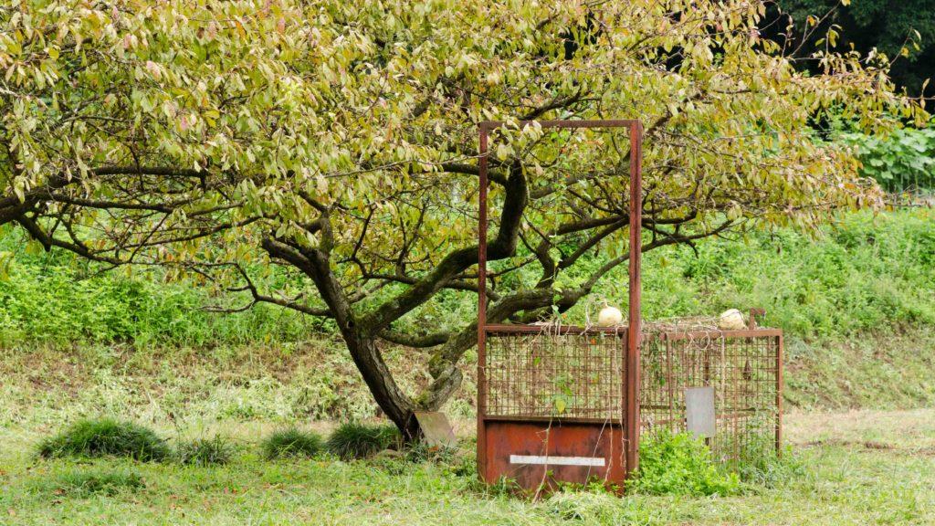 藪塚石切り場跡地のイノシシ用罠