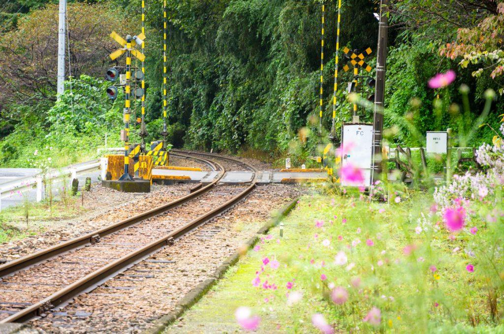 上神梅駅のコスモス